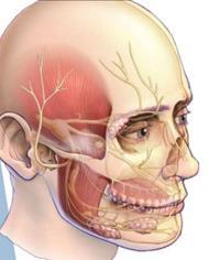 I rami del trigemino lungo cui si irradia il dolore